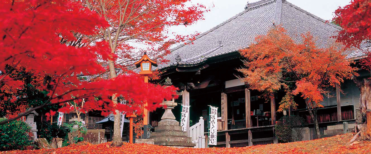 Temples, Shrines and Autumn Leaves
