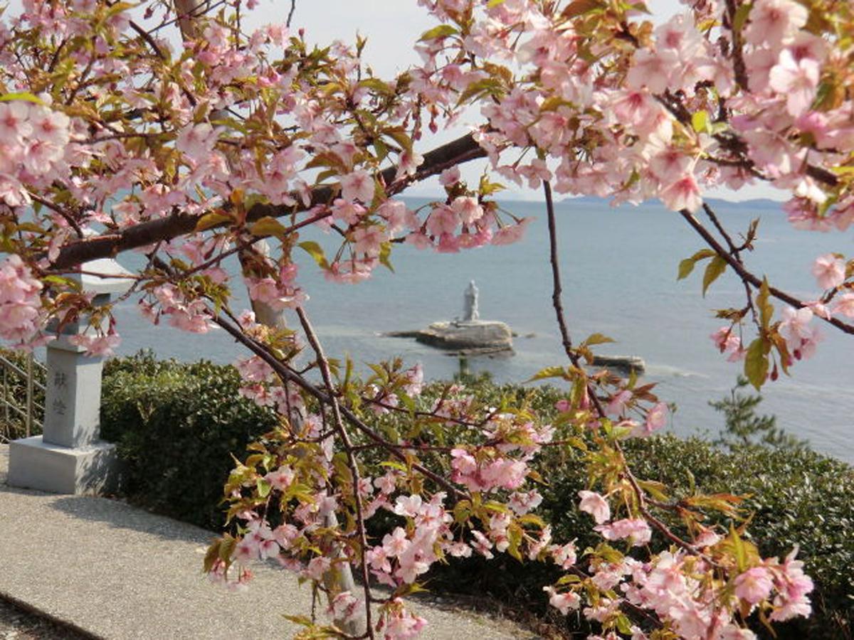 聖崎公園の河津桜