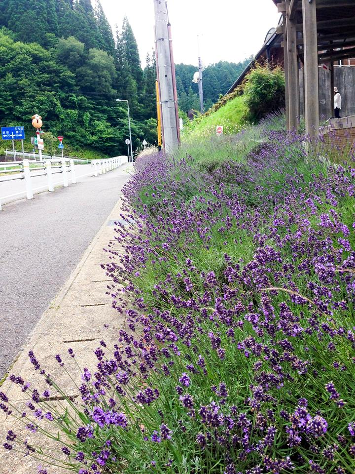 Lavender Fair - Roadside Station Donguri-no-Sato Inabu