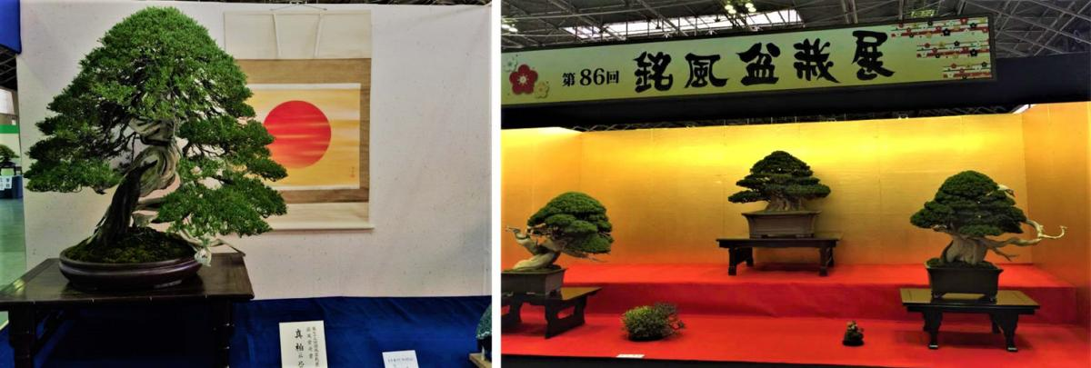 87th Meifu Bonsai Exhibition (Meifu-ten)