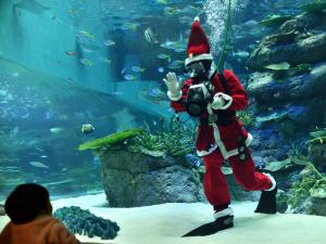 Port of Nagoya Public Aquarium - Christmas Aquarium Events