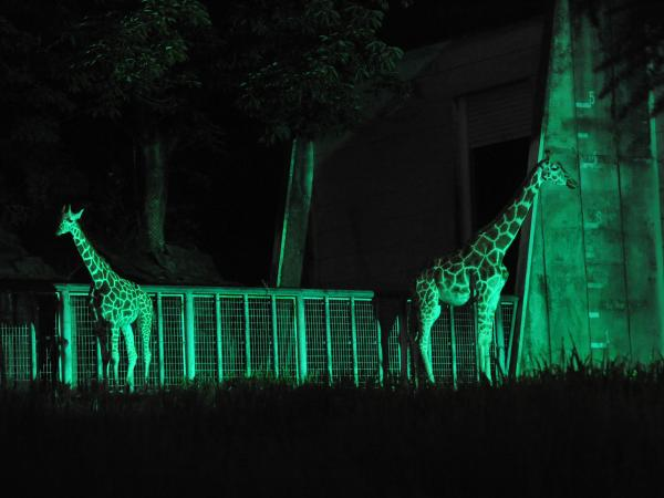 Night Zoo